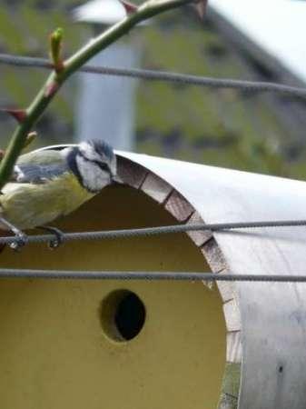 02 vogelhuisjes