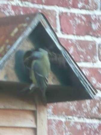 11 vogelhuisjes