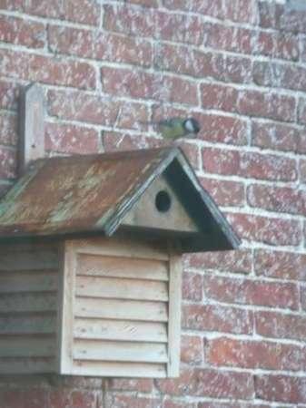 12 vogelhuisjes